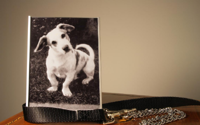 image for September 13th is National Pet Memorial Day
